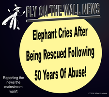 Elephant Cries After Being Rescued From Abuse! by IAmTheUnison