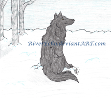 Wolf in Snow Commission by RiverEcho