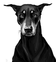 Doberman Study by Eliket