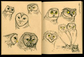 Owl Sketches 03 by Cre8tivemarks
