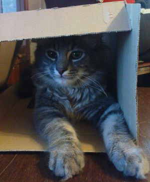 Taking over the boxes by `TiaVon