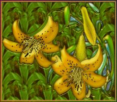 Day Lily - colored by patrx