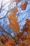 leaf in the sun by kendallcasimir