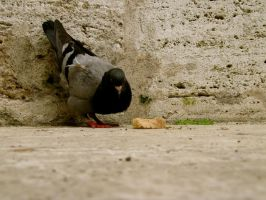Pigeon by CHritzel