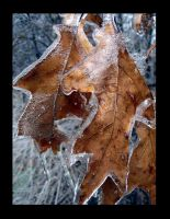 ice storm 5 by heatherspettals