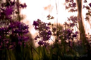 Flowers in sunlight by Thessen