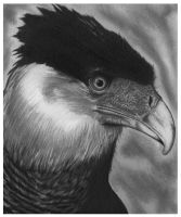 Hawk Graphite Rendering by reyjdesigns