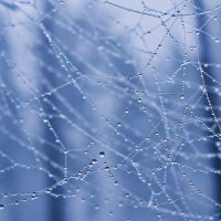 spider web by Iridescent-happinesS
