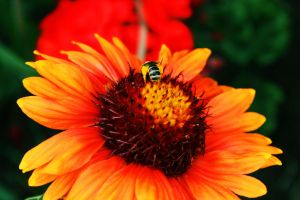 Pollinating by ToxicChick