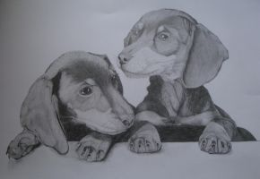 Dachshund by Smok15