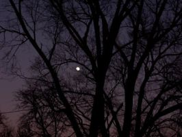 Moon Through the Trees by musicjunkie09