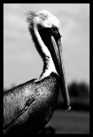 Pelican by xXCold-FireXx