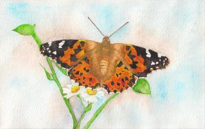 Painted Lady Butterfly by MeadowDelights