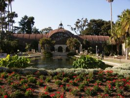 Lily Pond 2, Balboa Park by Debit