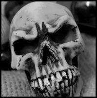 Skull. by MoiraHermione