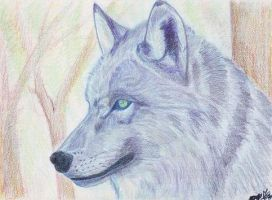 loup 7 by angeloup