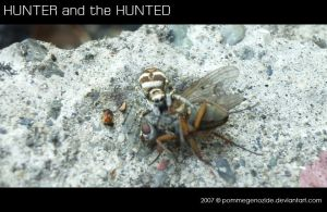 HUNTER and the HUNTED by pommegenozide