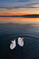 Swan lake by NickKoutoulas