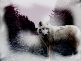 Wolf In Fog by EscapeFromWonderland