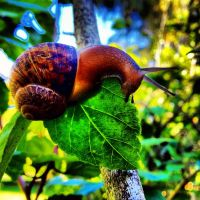 iPhone4S.Snail by VLStone