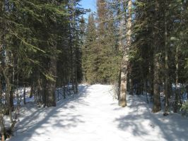 Snowy Forest Three by Eltear-Stock