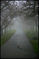 Burnaby Mountain In Fog I by bcdirector