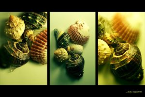 Shell Fantasies by nighty