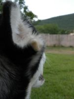 Dog's Eye View by discountabortions