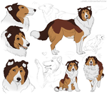 Rough Collie_doodles by Leyver