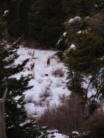 Elk 1 -- Nov 2009 by pricecw-stock
