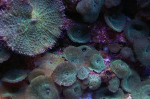 Reef by LadyRStock