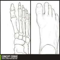Anatomy Resource: Feet by CGCookie