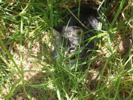 Stalking in the grass by Madam-Milano