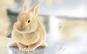 Bunny Rabbit by BunnyFroofroo