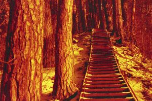 Redscale Haze: Stairway to... by Helkathon