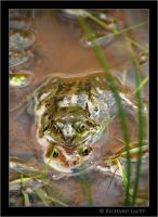 Froggy Lovers by RichyX83