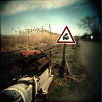 Holga 50 by xxlogre