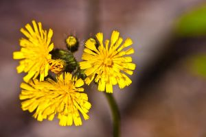 Forest Wild Flowers Macro 6 by Witch-Dr-Tim
