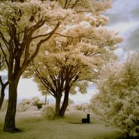 The Park Infrared - Redux by Dave-Ellis
