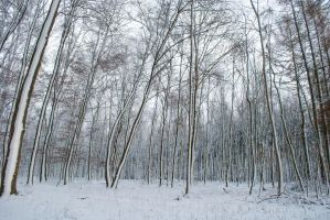 Snowscape Stock 62 by Sed-rah-Stock
