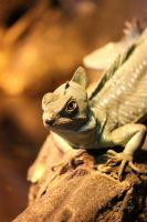 Green Crested Basilisk by cindy1701d