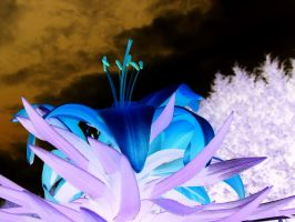 Lily Inverted by Cia81
