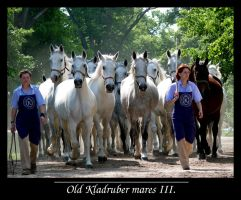 Old Kladruber mares III. by sarming