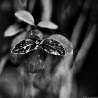 Black flowers, please... by LuciaConstantin