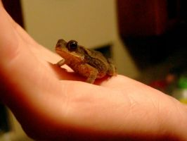 Tiny Toad 3 by JakeGreen