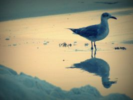 Mirror seagull by korovabar