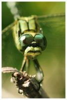 Lookin to my eyes by Insect-Lovers-Club