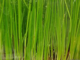 Grass 04 by tienod