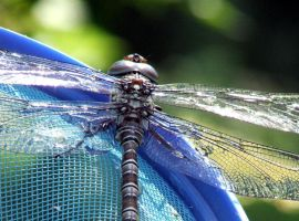 Dragonfly by sawns