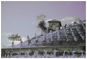 vineyard composite by vw1956